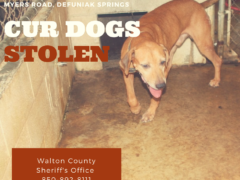 FOUR CUR DOGS STOLEN FROM DEFUNIAK SPRINGS MAN
