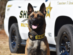 K9 JESTER JOINS REVAMPED WCSO K9 TEAM