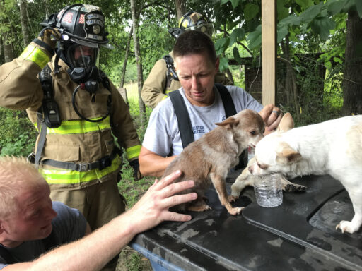 Final Dog Found in Home