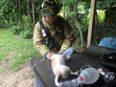FIREFIGHTERS SAVE FIVE FAMILY PETS IN STRUCTURE FIRE