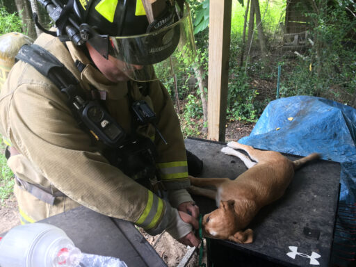 Firefighter Saving Hound Puppy