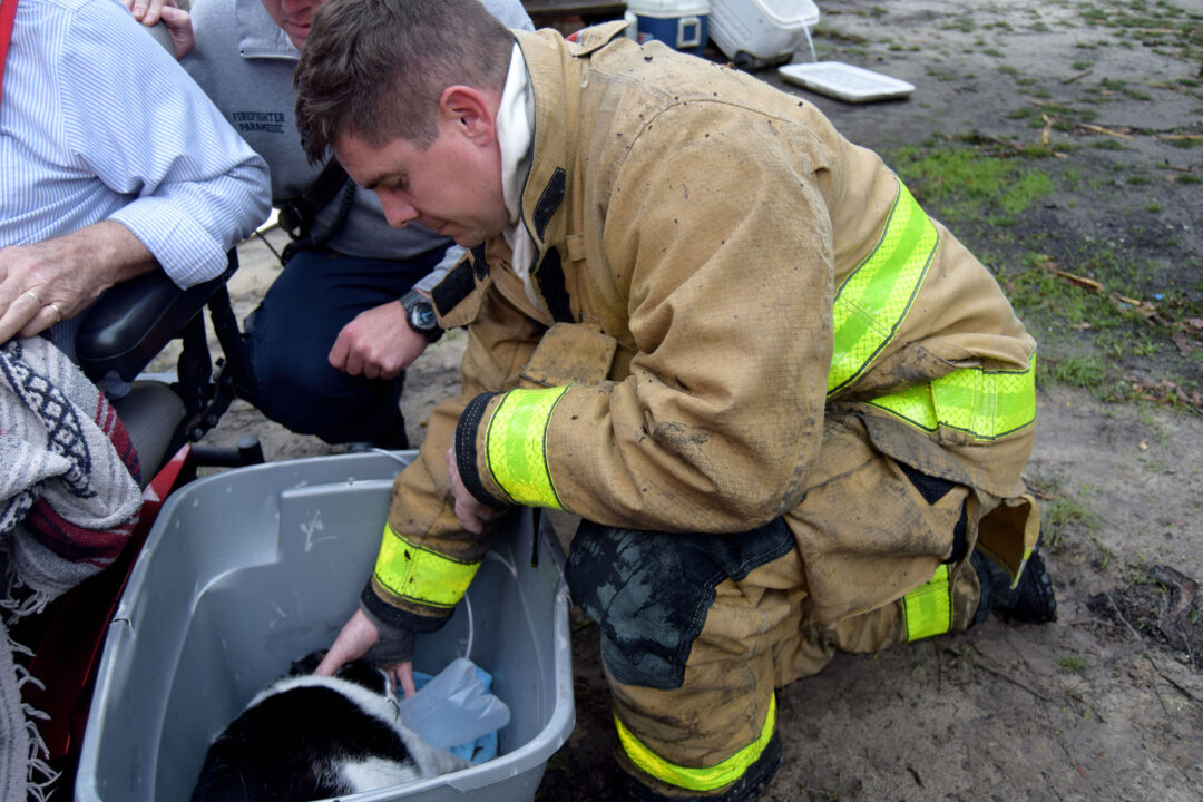 Firefighter bending down giving oxygen to black and white cat in a grey plastic container
