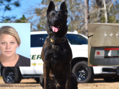 K9 DRAGO SNIFFS OUT COCAINE FOLLOWING TRAFFIC STOP; DEFUNIAK SPRINGS WOMAN ARRESTED FOR INTENT TO SELL