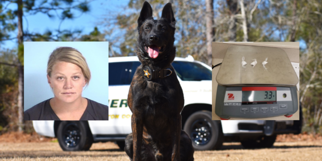 K9 Drago pictured with drugs and a mug shot of Carly McDonald.