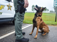 K-9 JESTER SNIFFS OUT 8.6 GRAMS OF COCAINE;  ONE IN CUSTODY, $2,659 IN CURRENCY SEIZED