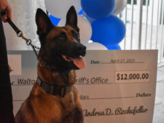 Dog standing in front of a big check with his tongue out