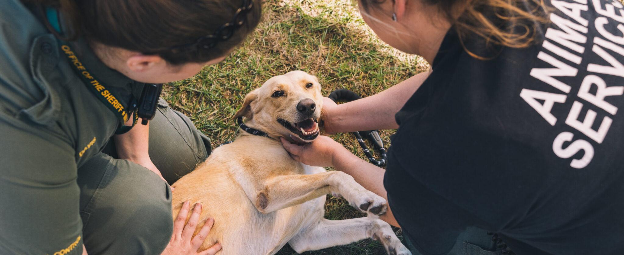 Two women petting a yellow Labrador retriever dog